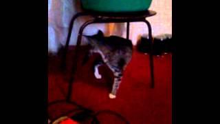 Кот и его жопа