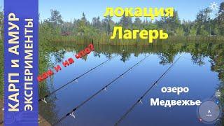 Русская рыбалка 4 - озеро Медвежье - Карп и амур как ловить