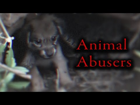 YouTube's Fake Animal Rescue Channels