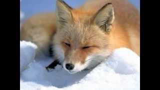 Животные Северной Америки 2_3.wmv