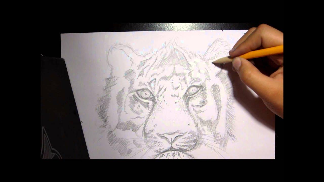Drawing A Tiger