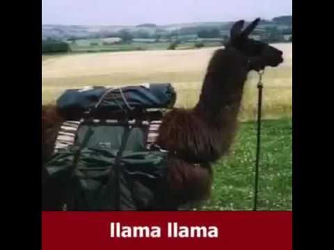 Llama and duck song!!!