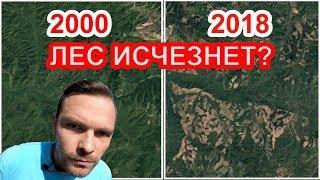 👍Жестокая вырубка лесов Сибири.🌳 Что останется потомкам?