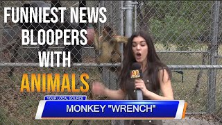Funniest animal bloopers on live tv