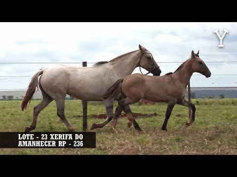 LOTE   23 XERIFA DO AMANHECER RP   236