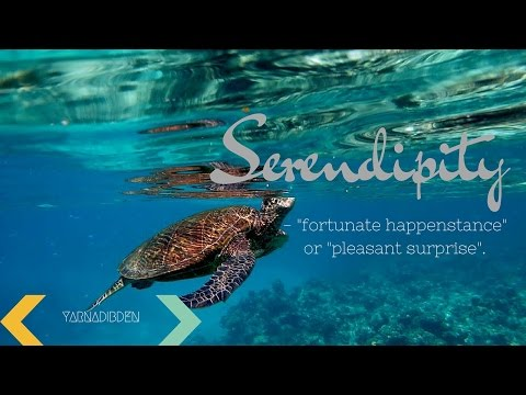 Serendipity ~ Deep Bay Shipwreck in Antigua and Reef Sites