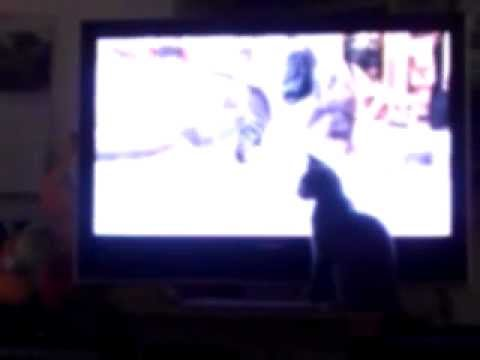 Ozzy Cat Attacks HDTV In Low Definition