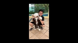 Old English Sheepdog Puppy Training