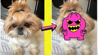 cute puppy transforms into a monster #shorts