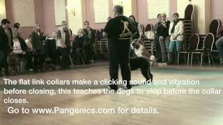 Training A Dog To Gait On A Loose Lead By Eric Salas