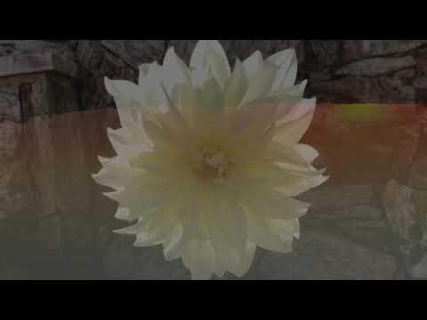 The Universal Prayer for Peace Series - Suely Aparecida Marqueis