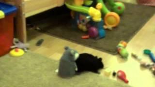 Прикол! У Сестри іграшка зламалася! :-)