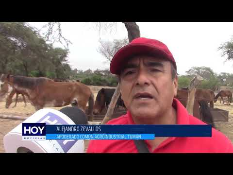 Chiclayo: Caballos de paso se mueren en establo de Tumán