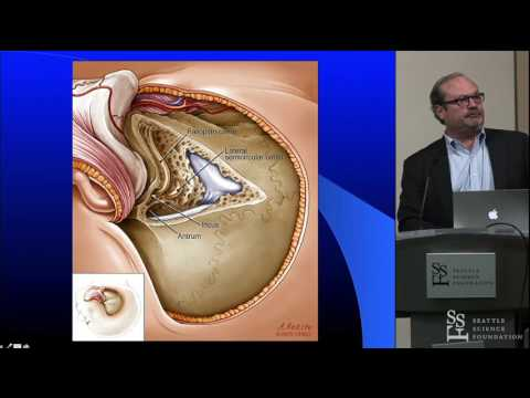 Petrosal Craniotomy Approaches - Sean O. McMenomey, M.D., FACS