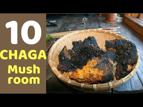 10-health-benefits-of-chaga-mushrooms