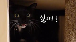 투명해먹이 무서워 우는 쫄보 고양이