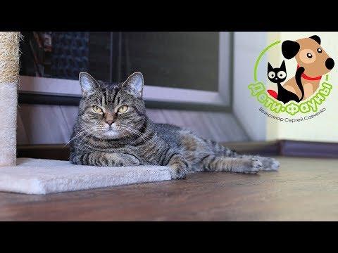 Вопрос: Как проверить кошку, взятую с улицы, на болезни?