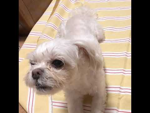 [mimi] singing dog 🎤 (노래하는 강아지)