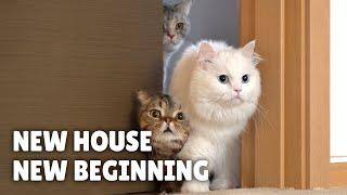 New House, New Beginning   Kittisaurus Villains