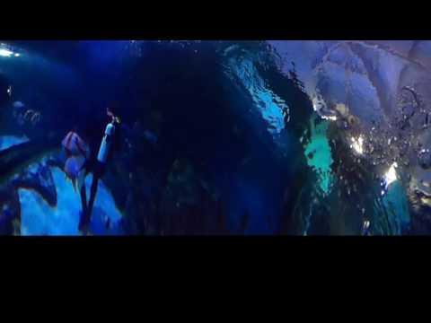 my Skegness Aquarium Dive 2 in 360 VR