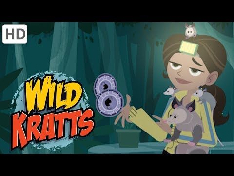 Wild Kratts 🌿🐊 Explore The Everglades! | Kids Videos