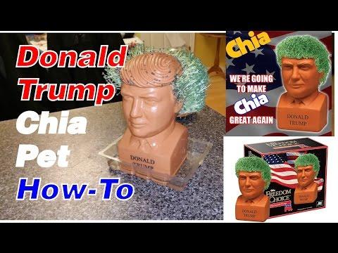Donald Trump Chia Pet - How To