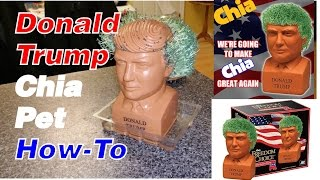 Donald Trump Chia Pet - How To