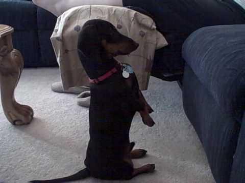 Dog Sitting Up