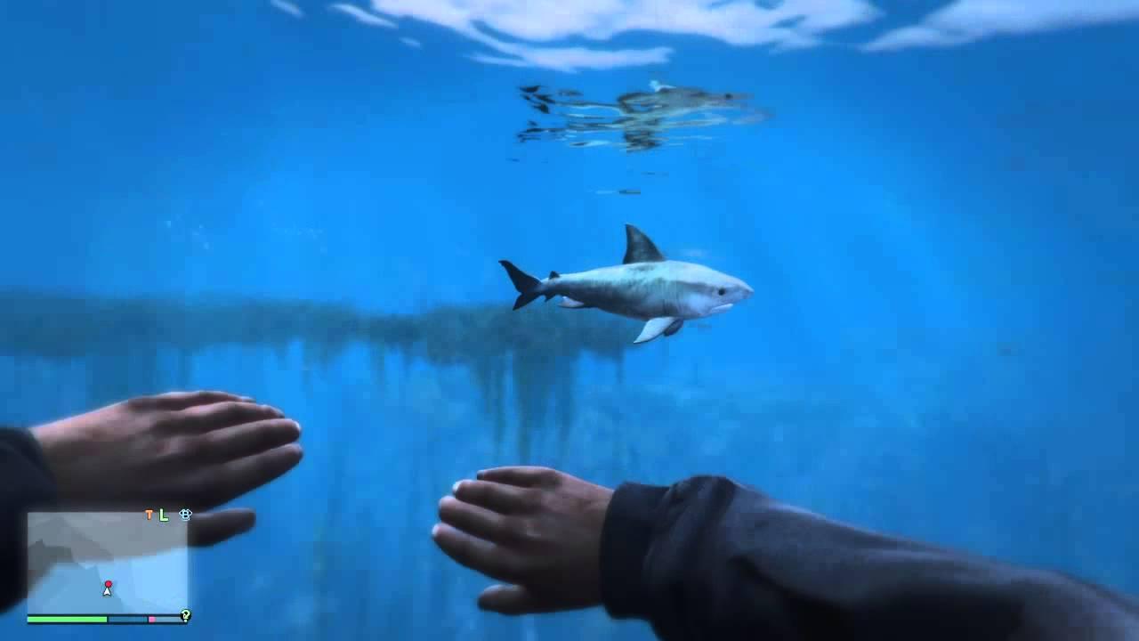 Shark Jumping Out Of Water Hd – Fondos de Pantalla