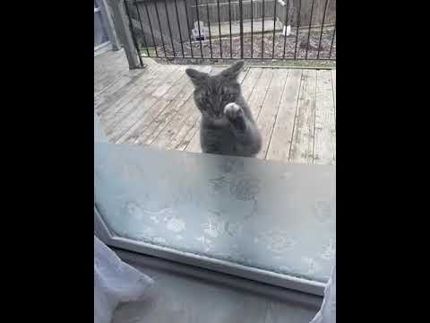 LET ME IN!!!--Cat Knocking the Door