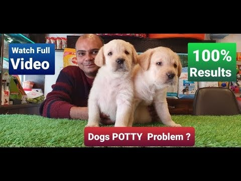 How to potty/ poop train a dog in 7 days ? by Baadal Bhandaari Pathankot Punjab 9878474748