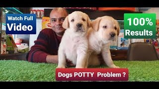 How to potty/ poop train a dog in 7 days? | By Baadal Bhandaari | Pathankot Punjab 9878474748