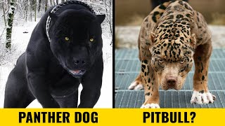 10 Most Incredible Dog Breeds In The World!