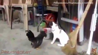 Смешное видео про животных 2016