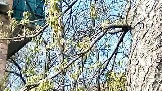 Кот на дереве!!!