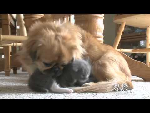 Dog adopts abandoned kitten