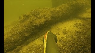 Зимняя подводная охота на почти крупного судака в отличной видимости