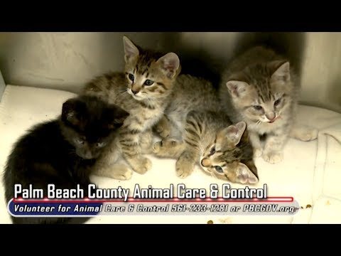 County Connection: Volunteering with Palm Beach County