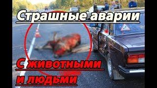 Страшная подборка ДТП с людьми и животными №4