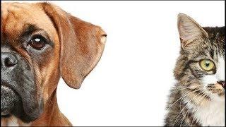 Dog vs Cat Fight Unexpected Revenge Funny Animals Kingdom Short Movie Must Watch