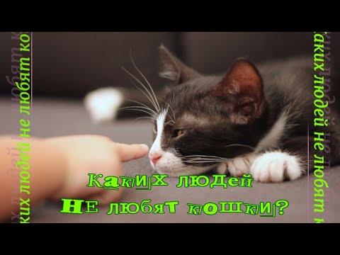 Вопрос: Какие бактерии передаются от кошек к людям , вызывающие любовь к кошкам?