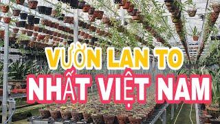 Vườn lan to nhất Việt Nam của đại gia Nguyễn Tấn Sơn