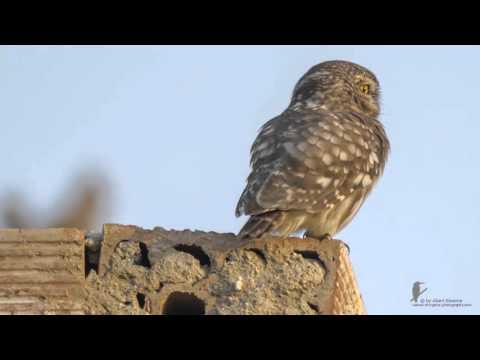 Έφηβος πουλί