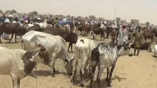 Campagne d'Assainissement du Marché du Médicament Vétérinaire (CAMMVET) AU NIGER