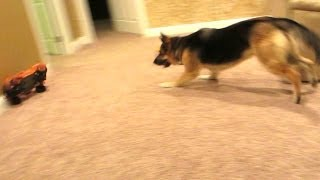 Dog vs Truck!!