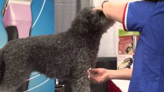 Grooming A Show Rustic Coated Pumi