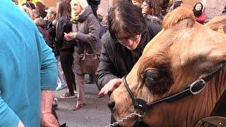Tarine et Abondance en fête à Chambéry