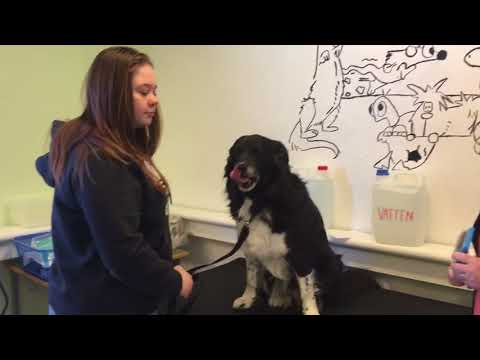Lektion i pälsvård av hund
