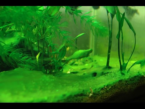 Image result for free photos algae in tank