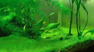 HOW TO: Prevent & Reduce Aquarium Algae